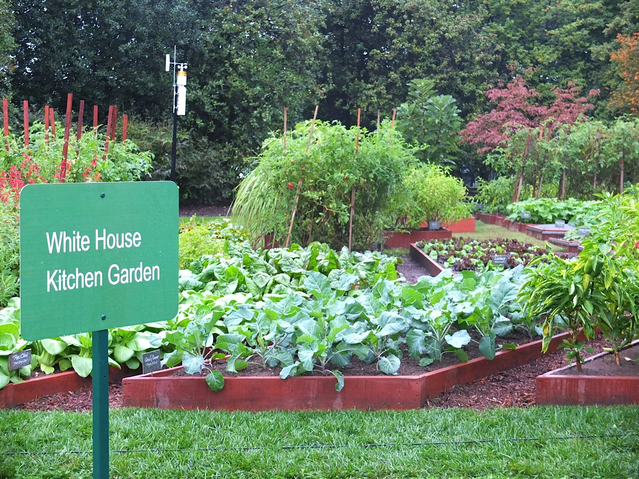White House Kitchen Garden Sandy Mckelveys Invitation To The White House Garden Highlands