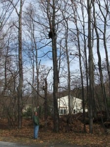 Carl Heitmuller recently spotted a bear high up in a tree near where he lives. Photo courtesy Carl Heitmuller
