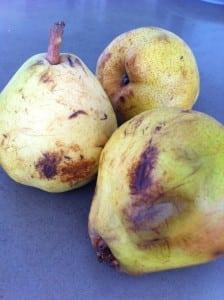 pear photo2