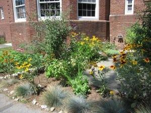 Haldane Garden one
