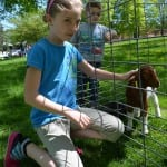 Children enjoy petting farm animals during Pedal Into Spring May 4, including mini horses from the Therapeutic Equestrian Center and this kid from Glynwood Farms. Photo by Jeanne Tao