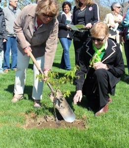 Philipstown Garden Club President Beverly Leardi, left, and Horticulture Chair JoAnn Brown plant an American chestnut tree on Chestnut Street April 26. Photo courtesy of PGC