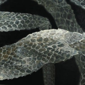 "Big Snake (2010), 48"" x 48"", oil on canvas"