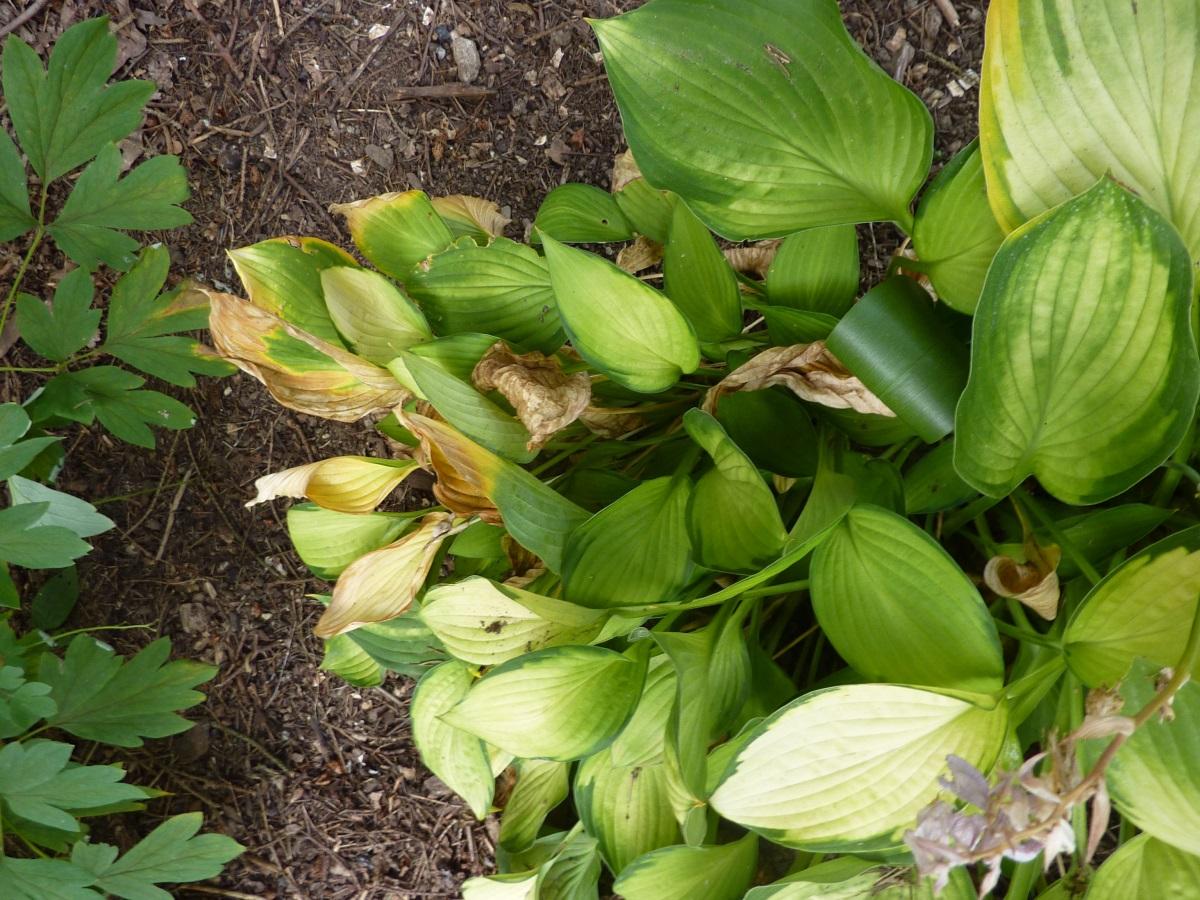Roots And Shoots Conversations Between Gardeners Highlands Current