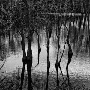 Stork Trees