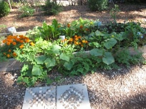 Last year's first graders planted this garden bed of flowers and vegetables.