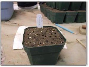 seeds in pot
