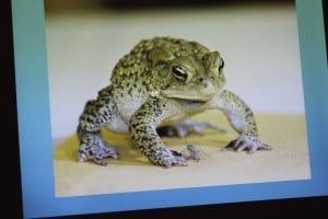 A projected image from Carl Heitmuller's Toad presentation