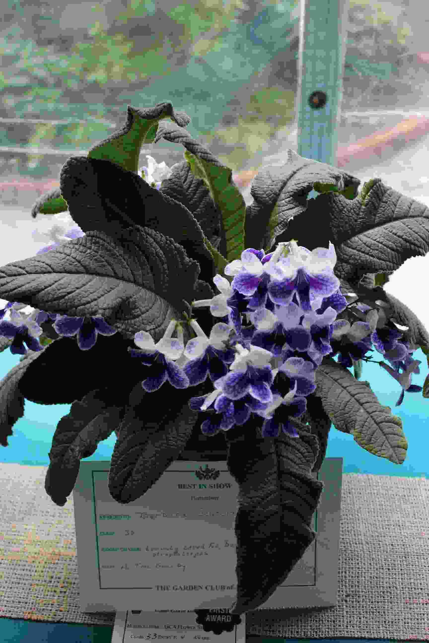 Best in Show – Philipstown Garden Club Flower Show IMG_9996