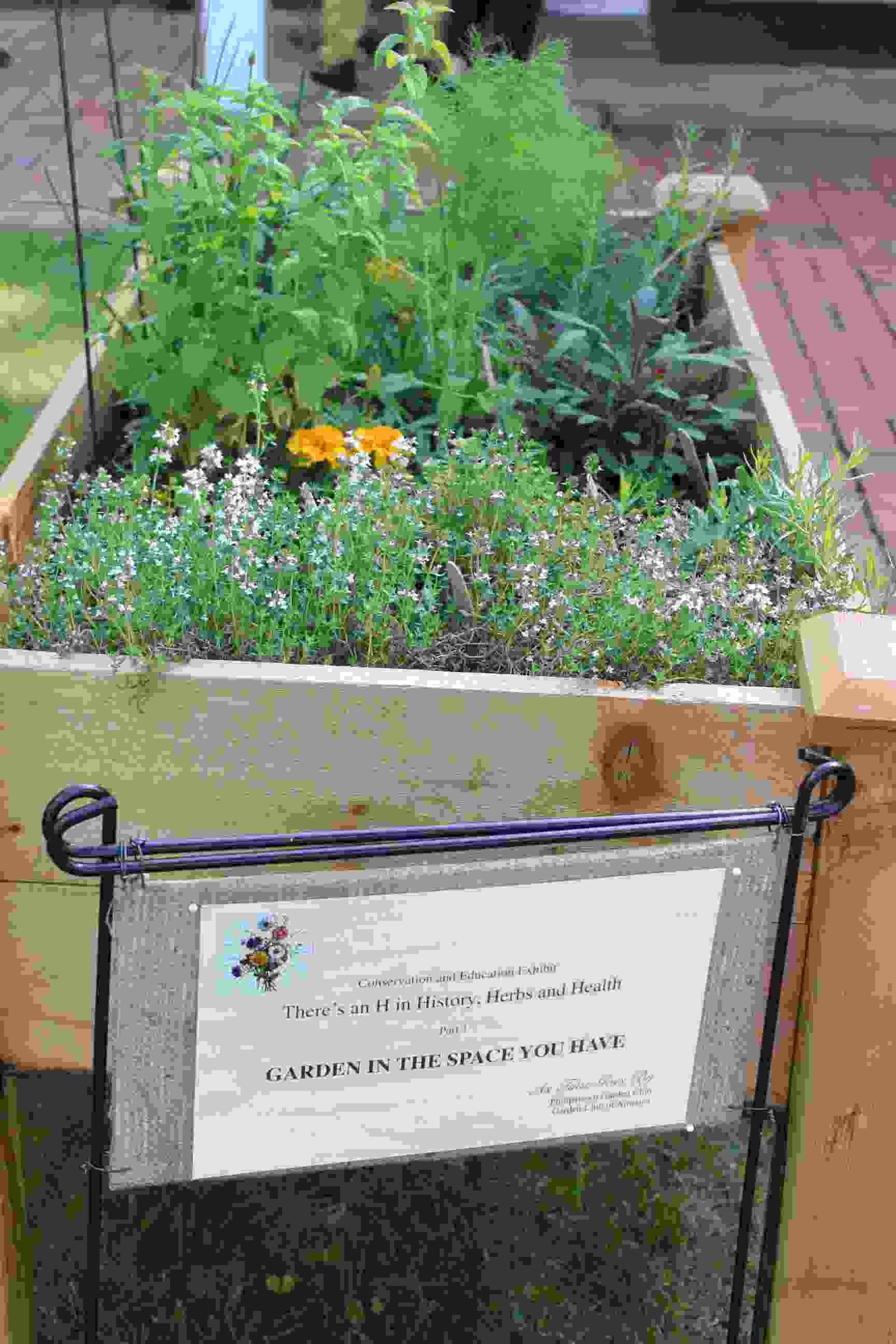 Philipstown Garden Club Flower Show IMG_9962