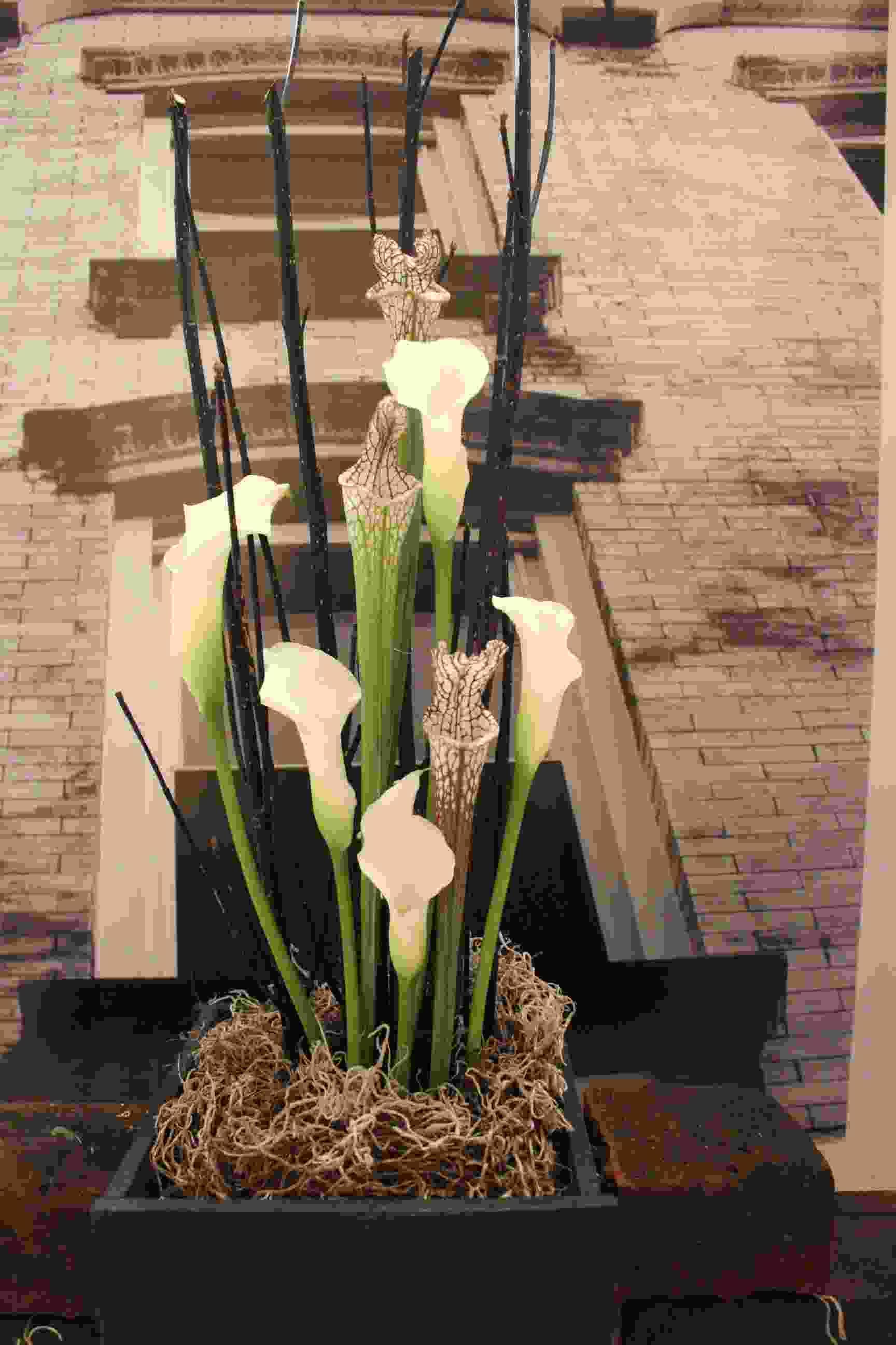 Philipstown Garden Club Flower Show IMG_9981