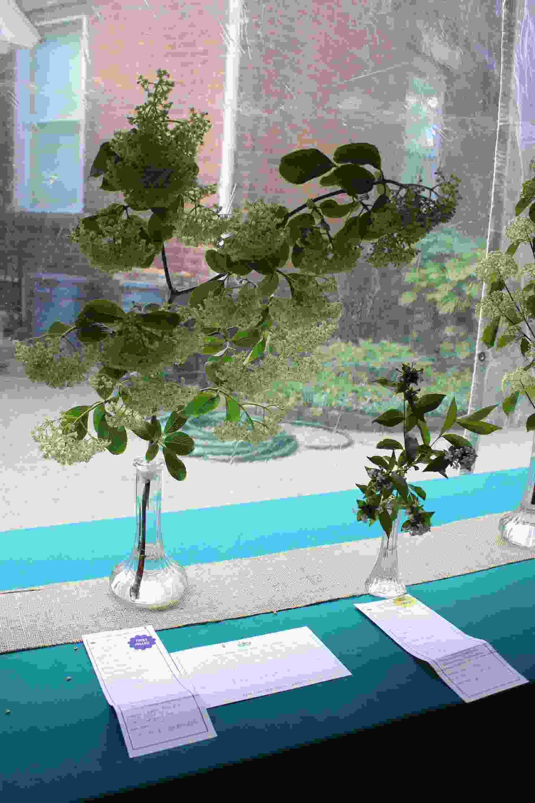 Philipstown Garden Club Flower Show IMG_9994