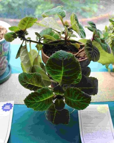 Philipstown Garden Club Flower Show IMG_9997
