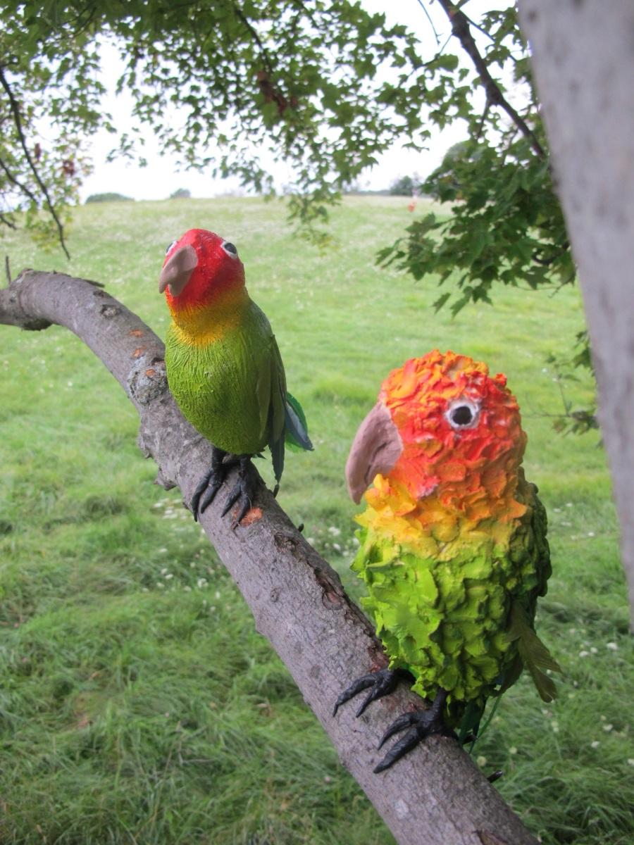 Saunders Farm Anna_Adler_parakeets cu