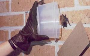 Capturing a bat