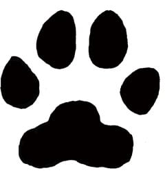 A mountain lion paw print rendering from the New York State Department of Environmental Conservation