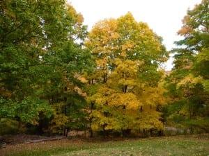 Gorgeousfallcoloriscomingsoon.(PhotobyP.Doan)