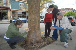 Four members of Cold Spring's Tree Advisory Committee take a close look at a large, village-owned tree in front of the Ming Moon Restaurant on Main Street. From left, Kory Riesterer, Mary Saari, Committee Chairperson Jennifer Zwarich and Tony Bardes.
