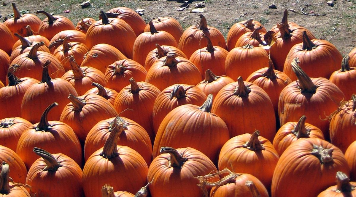Beacon Pumpkin 2014