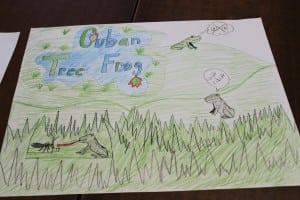 Cubantreefrogposter,drawnbyAmandaTimke (photo by A. Rooney)