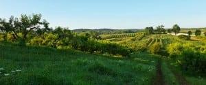 FarmlandconservedbyScenicHudsononKerleyCornersRoadinRedHook(PhotobyRobertRodriguezJr.)