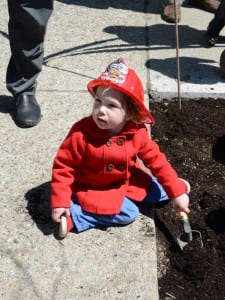 Troweling away on Arbor Day