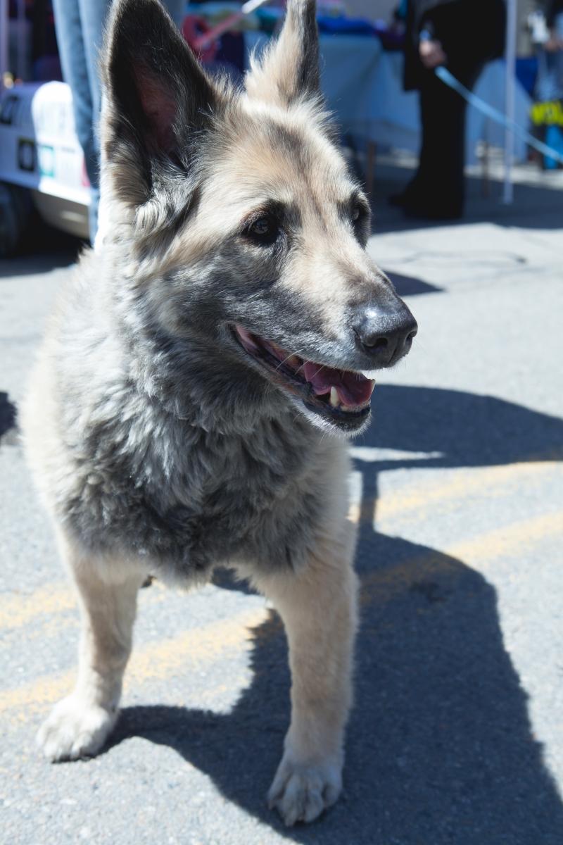 Beacon Barks 4-25-15 dog 1