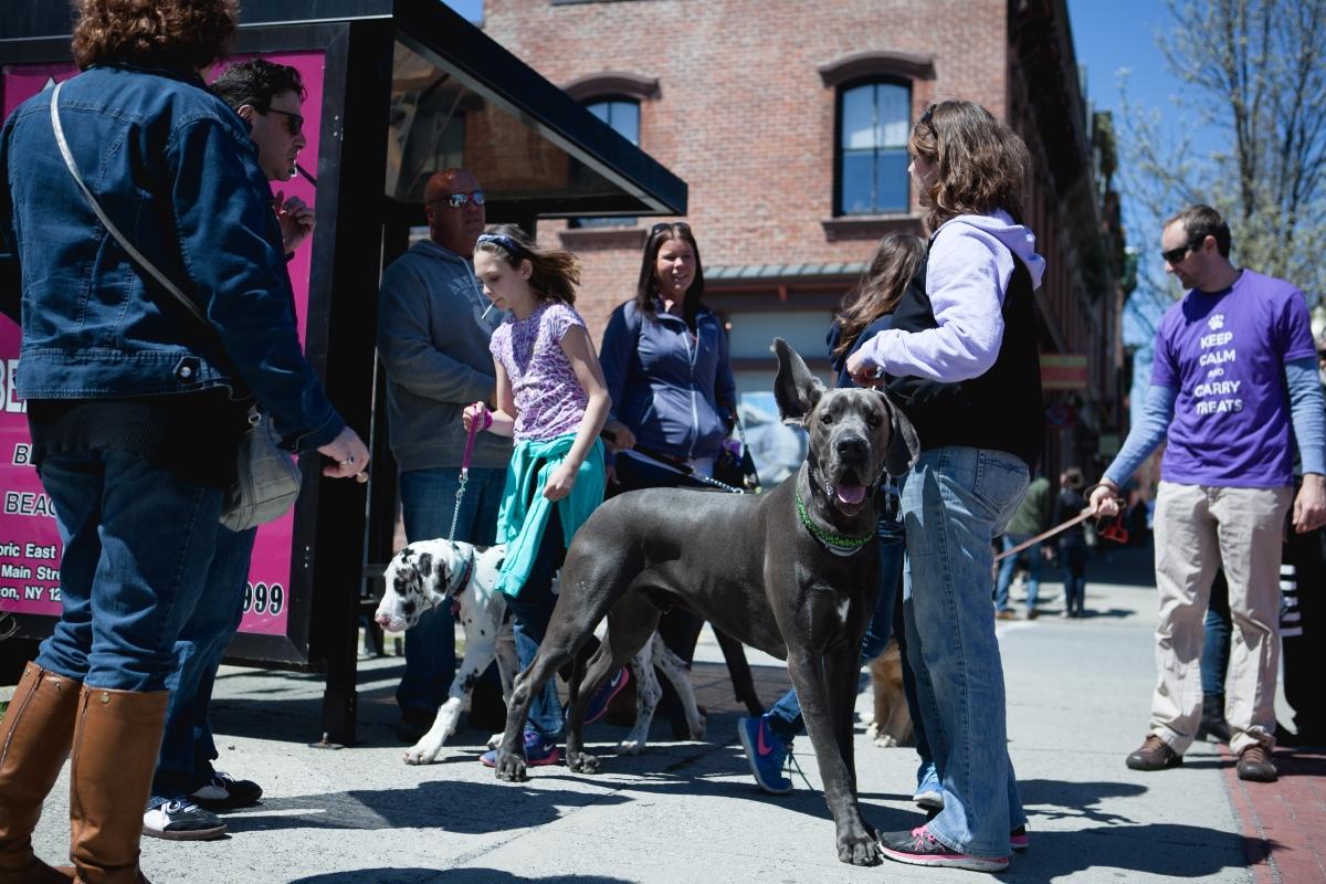 Beacon Barks 5-25-15 dog ear action