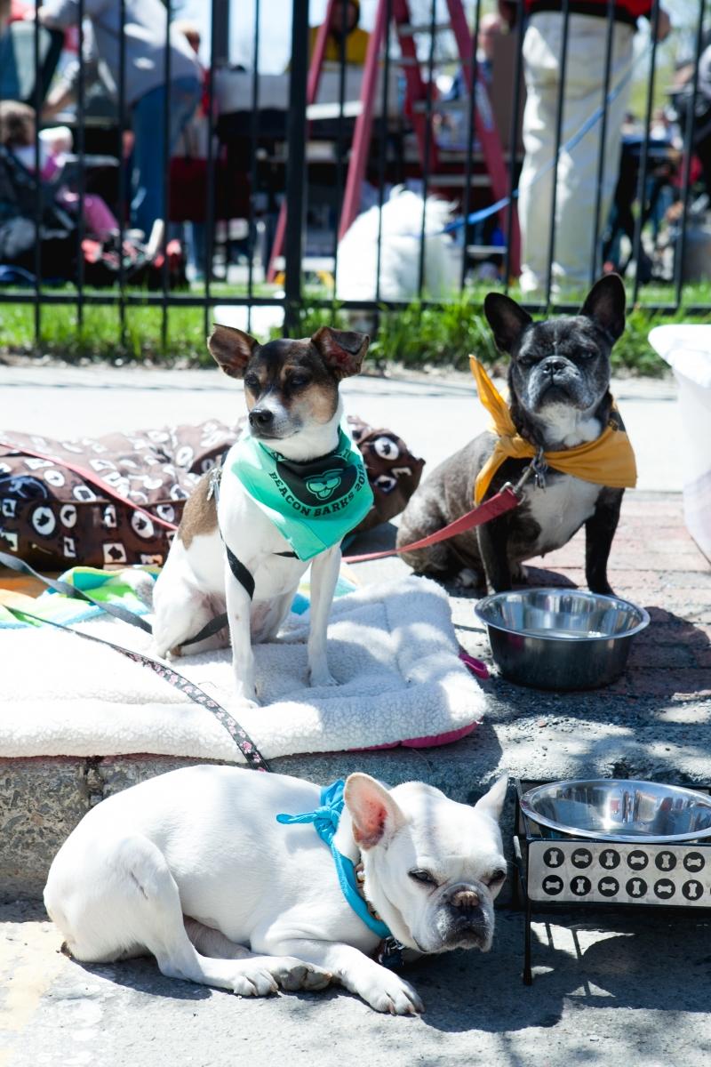 Beacon Barks 5-25-15 dogs 1