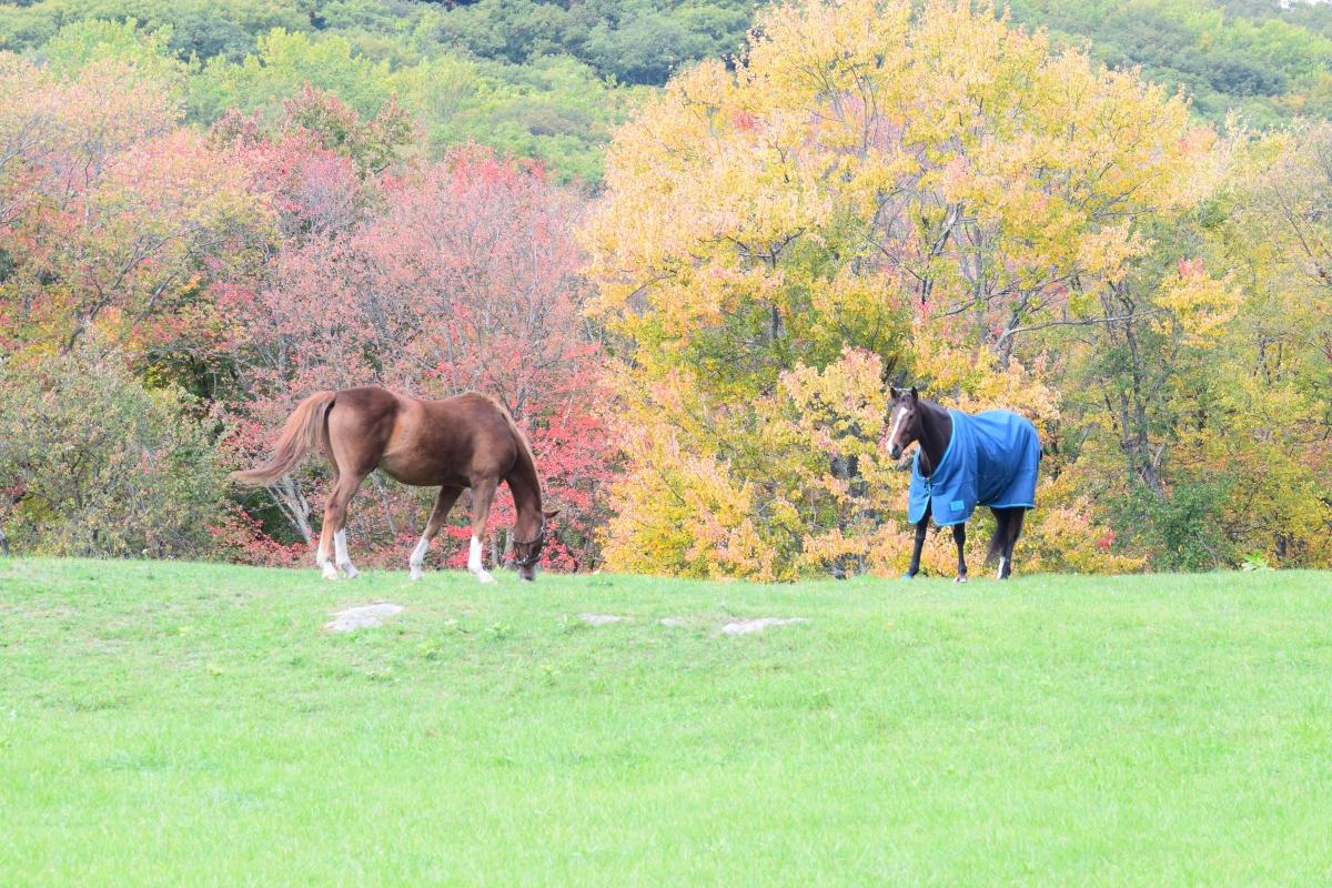 Garrison Horses
