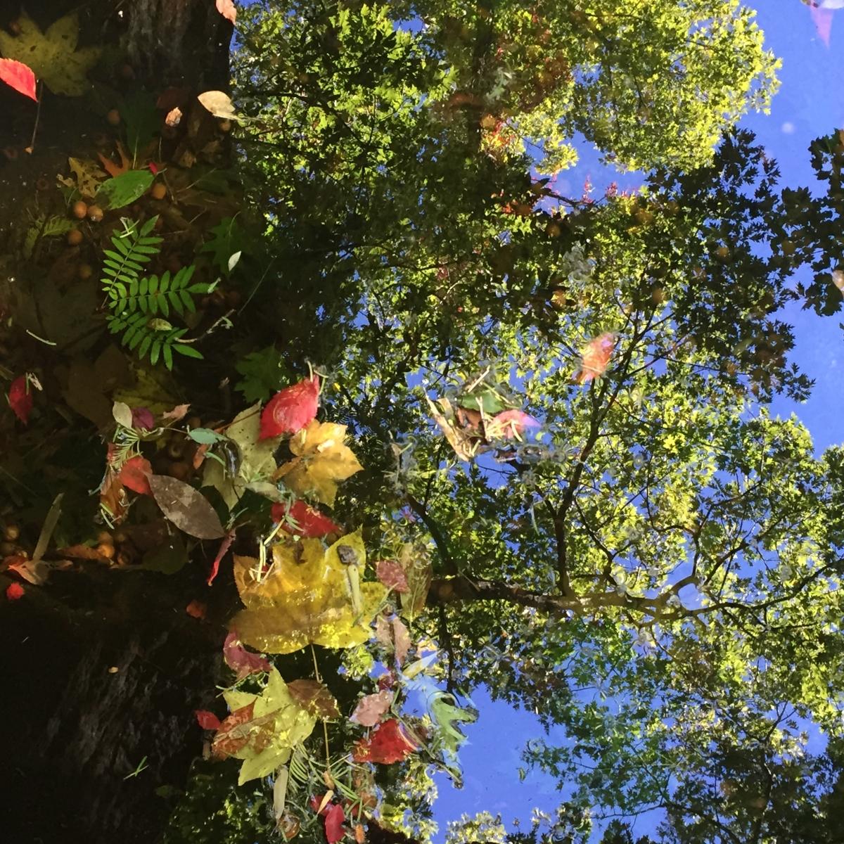 Marianne Sullivan-Stonecrop Gardens