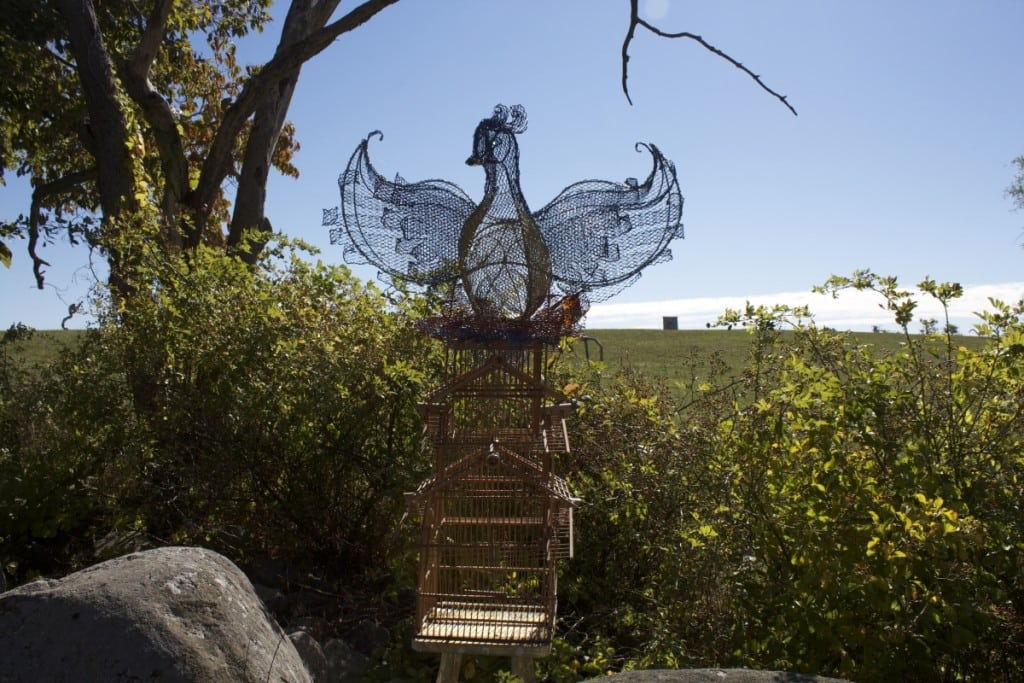 Phoenix by Sarah Havilland