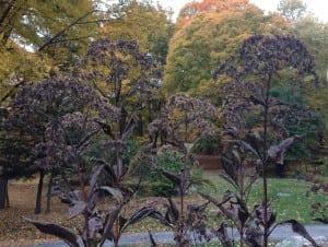 LeavedrybloomsonplantslikethisJoe-pyeweedthatbirdswilluseforfood.(PhotobyP.Doan)