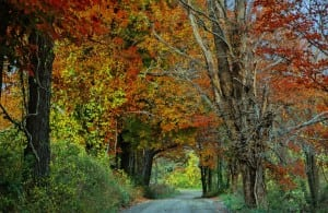 """Tree-Lined Road in Fall,"" by Carolyn D. Smith"