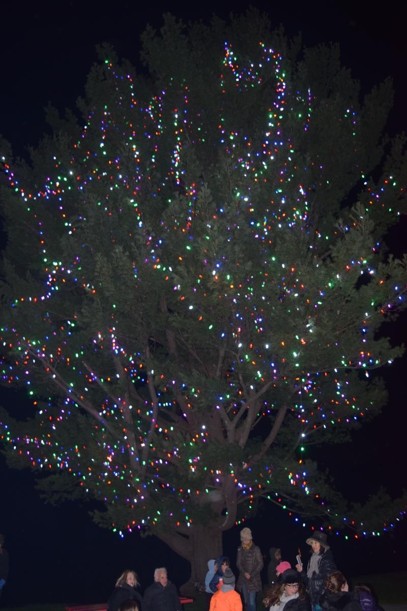 Winter Hill tree lighting