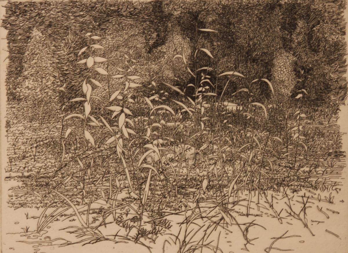 George Knauss etching- Roadside Weeds IMG_7613
