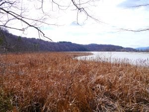 Constitution Marsh (photo by J. Simms)