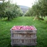 Gathering the apples at Fishkill Farm (photo provided)