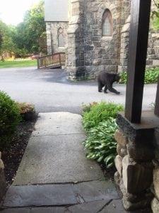 The Rev. Shane Scott-Hamblen spotted the bear at St. Mary's Church.
