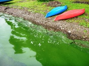 A beach in western New York with a harmful algal bloom. (Photo provided. )
