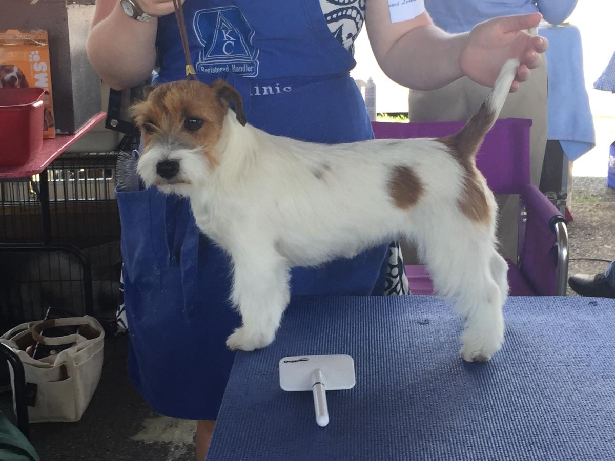 Dog Show IMG_2903