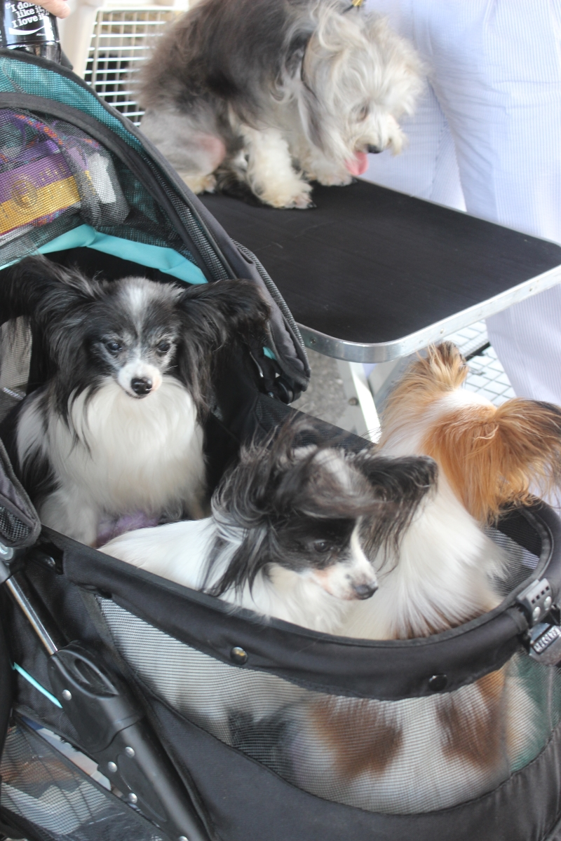 Dog Show IMG_4756