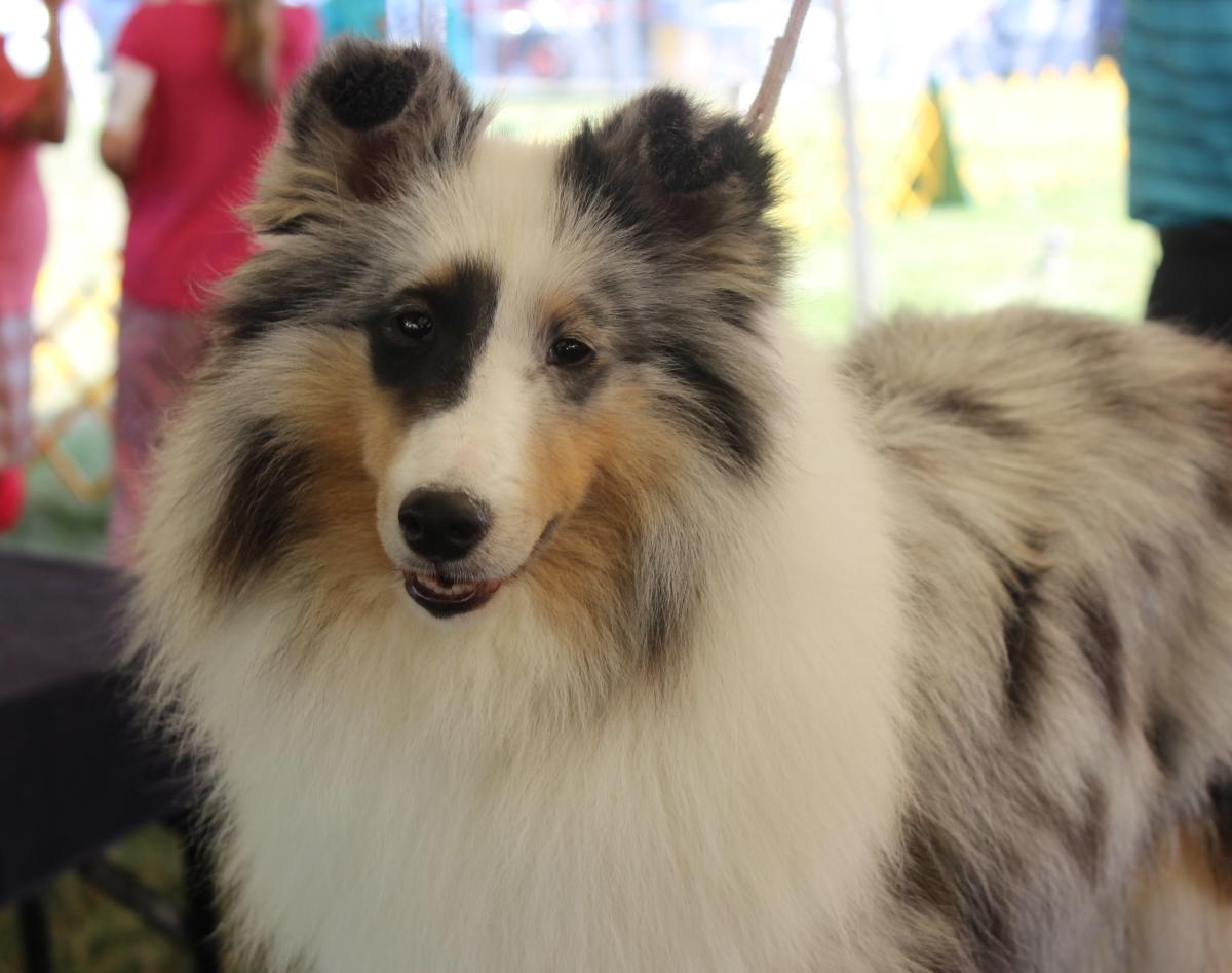 Dog Show IMG_4844