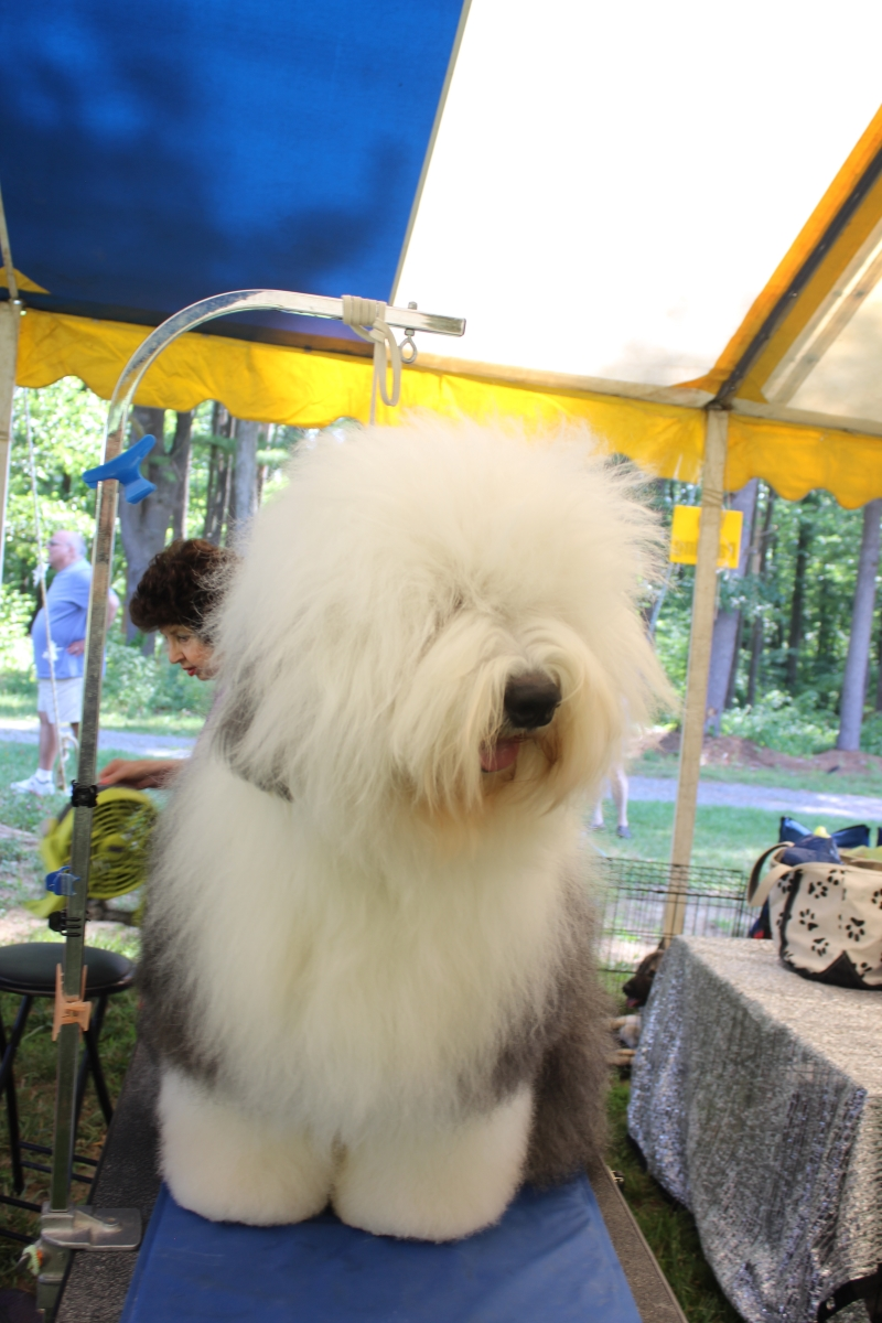 Dog Show IMG_4888