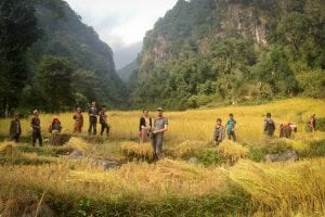 Lucas Millard, center, during the filming of the rice harvest in Gola, Nepal (image courtesy of Bottomless Well Films)