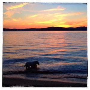 Rufus at sunset on July 14 at Lake Sunapee in New Hampshire (Photo by J. Dizney)