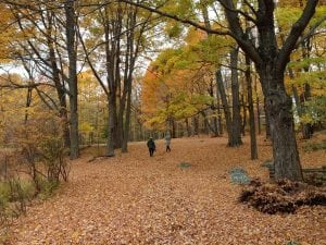 It's almost time for a fall walk, kicking up the leaves. (Photo by P. Doan)
