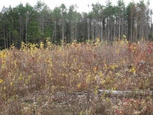 An example of young forest (takingactionforwildlife.org)