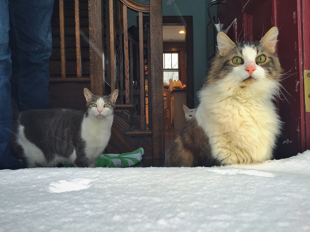cats blizzard