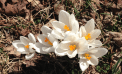 Roots and Shoots: Signs of Spring